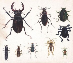 Beatrix Potter, 'Studies of nine beetles' © Frederick Warne & Co. 2006