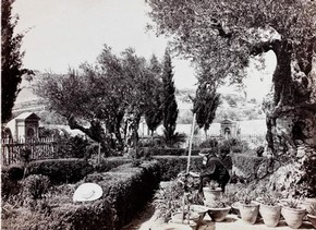 Garden of Gethsemane, Jerusalem Museum no. 3086-1920