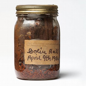 Figure 1. 'Book in a Jar' (NAL Pressmark: X900248) around 1988 (Photography by V