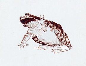 Randolph Caldecott, 'Study of a frog'. Museum no. E.3683-1932