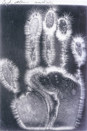 "'Electrograph of a hand', from ""Im Reich Der Phantome"" by Andreas Fischer, St. Petersburg, Russia, about 1997. Museum no. NAL NC980081"