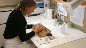 Conservator at work on the ceramics collections