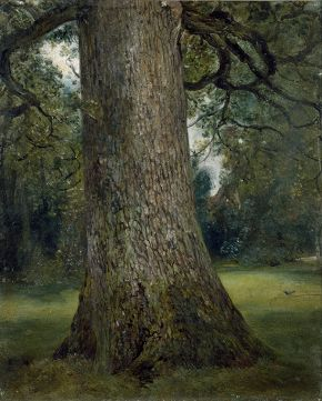 Study of the Trunk of an Elm Tree, John Constable, about 1824, oil on paper. © Victoria and Albert Museum, London