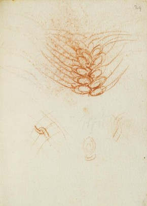Leonardo da Vinci, Forster Codex, Volume II, 29r, 1495. Museum no. F.141 Volume II R29 (Forster)