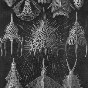 Figure 1. A plate from Haeckel's Kunstformen der Nature (1904).