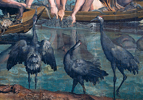 Cranes (detail)in The Miraculous Draught of Fishes by Raphael