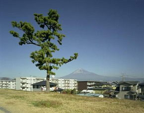 John Riddy, Shin-Fuji (Tree), 2005, from the series Views from Shin-Fuji, 2005, © John Riddy