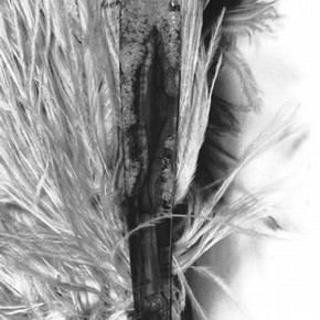 Figure 3. Cellulose Nitrate and ostrich feather fan belonging to Beatrice Lillie showing degradation. Museum no. S.327-1979