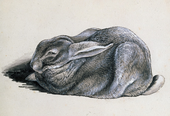 Beatrix Potter: The Tale of Peter Rabbit