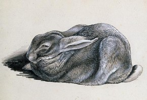 Beatrix Potter, 'Study of Peter Rabbit', © Frederick Warne