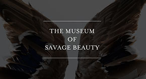 The Museum of Savage Beauty
