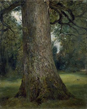 Study of the Trunk of an Elm Tree' by John Constable, oil on canvas, about 1821, Museum no. 786-1888. © Victoria and Albert Museum, London.