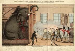 Destruction of the Noble Elephant, after 1826, hand-coloured print