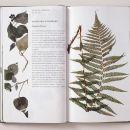 Helmut Völter, Handbook of Plants Growing Wild in the City, (Handbuch der wildwachsenden Großstadtplanzen), Institut für Buchkunst 2007