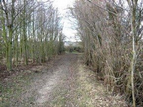 View of a walk around Wormingford