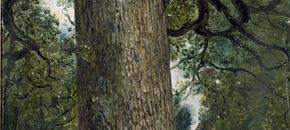 Memory Maps: 'Elm' by Robert Macfarlane