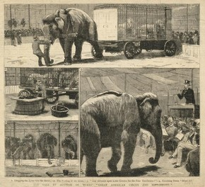 Newspaper article showing the auctioning of Myer's Circus, around 1887, steel engraving printed on newsprint, Museum no. PK 176/1539