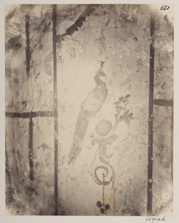 Smeaton's first published photograph of the Roman catacombs; wall painting of a peacock in the Jews' Catacomb