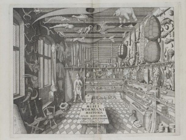 Double page illustration from Museum Wormianum..; by Ole Worm (1588 - 1654); published by Lugduni Batavorum : Apud Iohannem Elsevirium;  Dutch (Leiden);  1655.