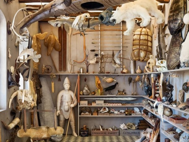 All Things Strange And Beautiful, an installation by artist Rosamond Purcell inspired by Ole Worm's Museum Wormianum. Photograph: Jens Astrup/Natural History Museum of Denmark
