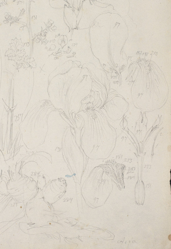 Page from sketchbook for Iris Germanicus showing numerical colour codes, graphite pencil on paper, 1786-7 (MS. Sherard 247/107). © Bodleian Library, University of Oxford, 2015