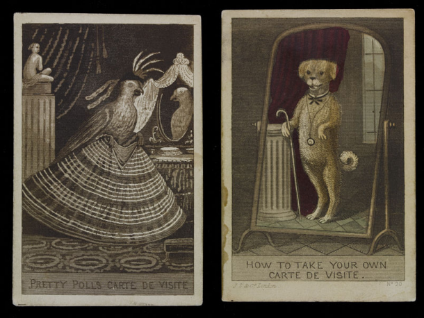 Two Satirical Prints Showing A Parrot And Dog Posing For Carte De Visite Photographs