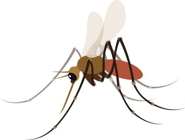 Mosquito emoji designed by Aphelandra Messer in .png format.