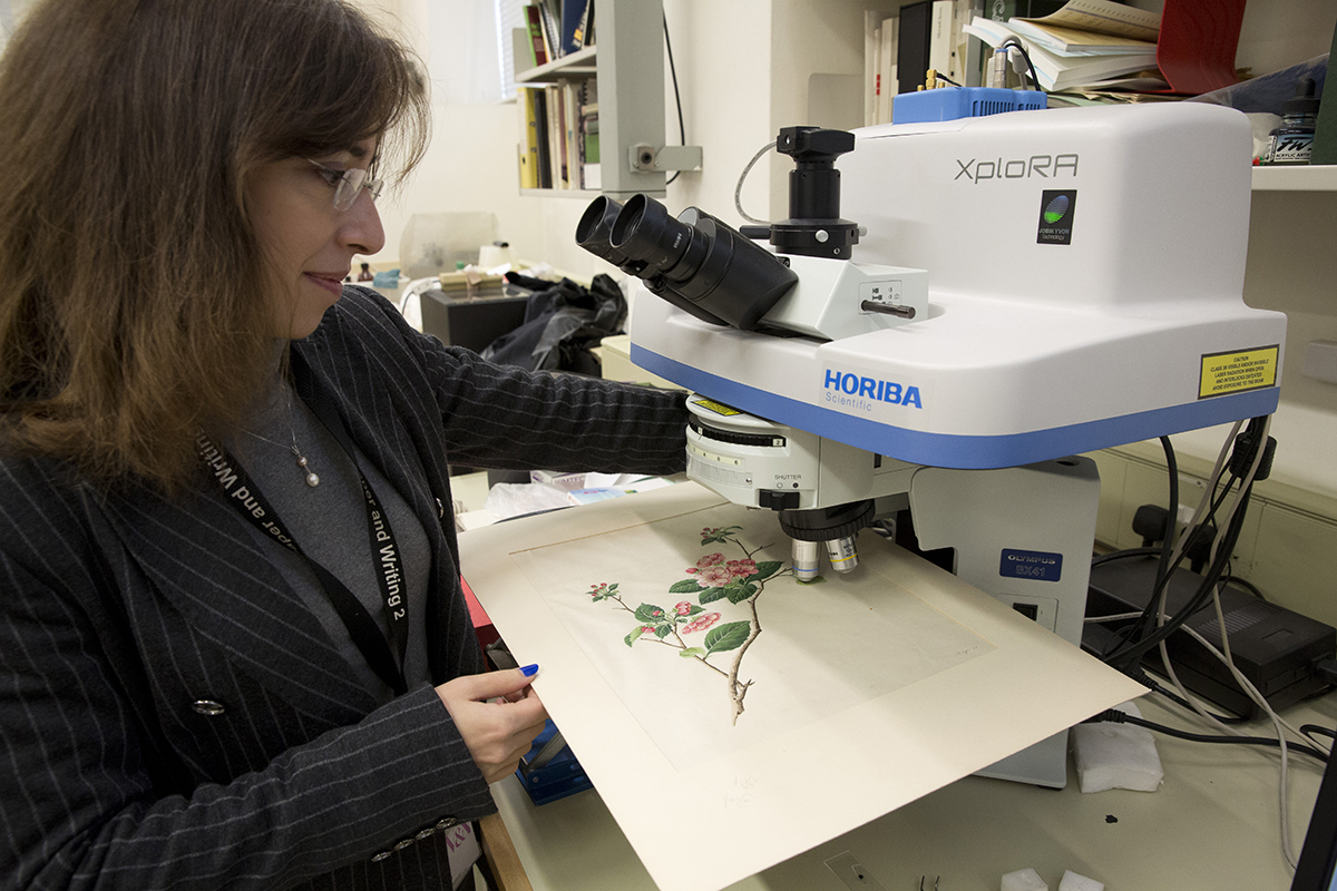 A botanical watercolour under the Horiba Raman microscope at the V&A