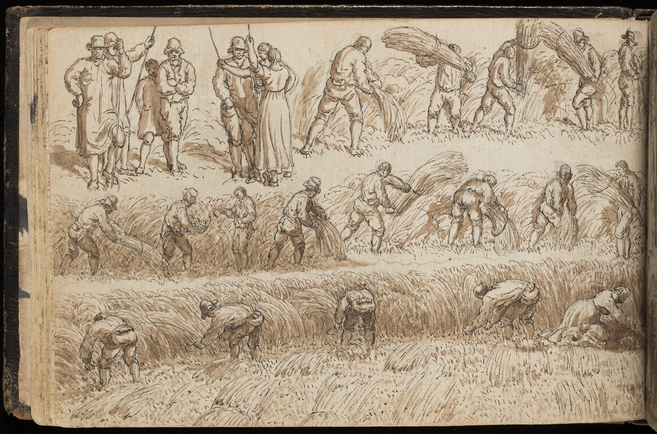 Drawing of harvesting wheat