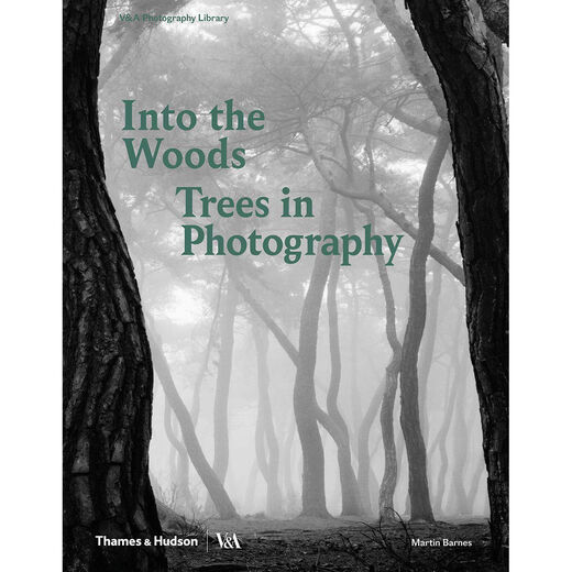 Into the Woods: Trees in Photography